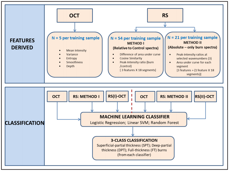 Figure 6. The Features Derived segment denotes all the features derived from OCT images and Raman spectra are listed in the box. The Classification segment denotes the identification of burn degree using three selected classifiers. Each model was trained with five sets of features: OCT, RS (I), RS (II), RS (I)-OCT, and RS (II)-OCT.