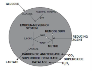 Figure 1. Structure of an artificial red blood cell. [26] (Released)
